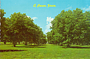 Pecan Grove Georgia cs6806 (Image1)