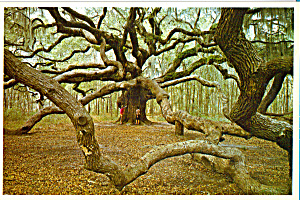 The Angel Oak John s Island  South Carolina cs6810 (Image1)
