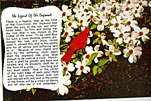 Legend of the Dogwood,with a Cardinal (Image1)