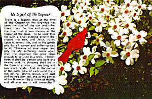 Legend of the Dogwood and Cardinal (Image1)