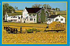 Harvesting Bales of Corn Fodder Amish Postcard cs6971 (Image1)