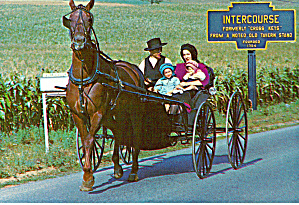 Amish Family and Their Horse and Buggy Postcard cs6972 (Image1)