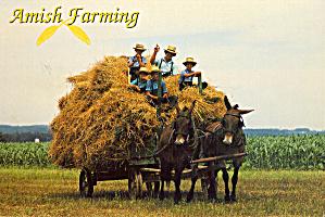 Amish Mule Drawn Hay Wagon Postcard cs6978 (Image1)