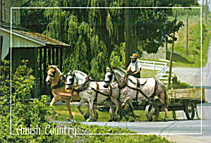 Amish Farm Wagon Three Horse Team Postcard Cs7021