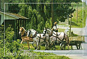 Amish Farm Wagon Three Horse Team Postcard cs7021 (Image1)