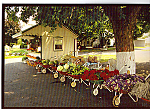 Amish Roadside Stand Postcard cs7025 (Image1)
