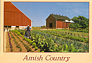 Amish Woman Tilling Her Garden Postcard cs7029 (Image1)
