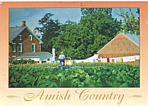 Amish Man Spraying Crop Postcard cs7030 (Image1)