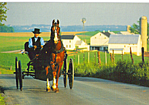 Amish Man Driving a  Buggy ostcard cs7032 (Image1)