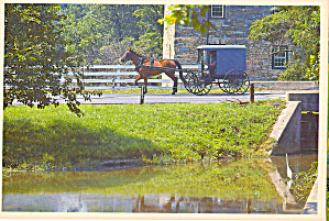 Amish Horse and  Buggy Postcard cs7033 (Image1)
