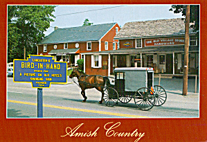 Amish Buggy In Bird in Hand, PA Postcard cs7034 (Image1)