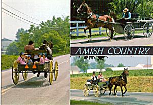 Amish Open Buggys Postcard cs7035 (Image1)