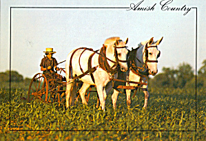 Amish Farmer With Team of Horses cs7041 (Image1)