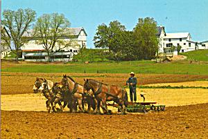 Amish Farmer Using Five Horse Team in Spring cs7142 (Image1)
