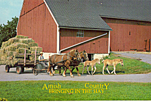 Amish Farmers Bringing in the Hay, Belgians, Colts cs7147 (Image1)