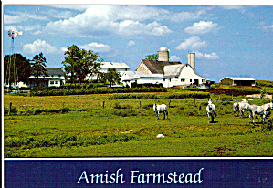Unique White Mules on Amish Farmstead cs7152 (Image1)