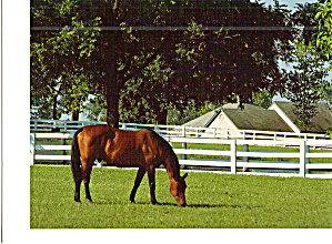 Ramblin  Willie, Kentucky Horse Park, Lexington, KY (Image1)