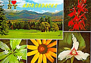 Wild Flowers Adirondacks New York cs7323 (Image1)