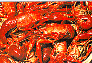 Boiled Crayfish,  (Image1)