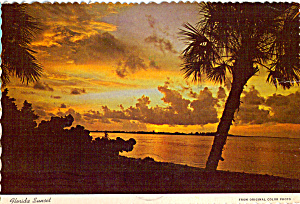 Palms And Sea Grapes In A Tropical Sunset Florida Cs7671
