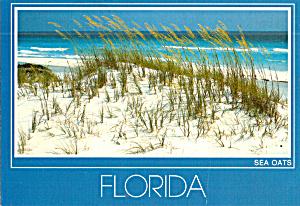 Sea Oats and Sand Dunes Florida Beaches cs7680 (Image1)