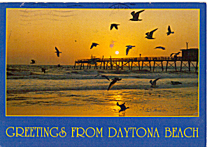 Birds And Pier At Daytona Beach Florida Cs7683