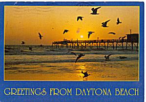 Birds and Pier at Daytona Beach Florida cs7683 (Image1)