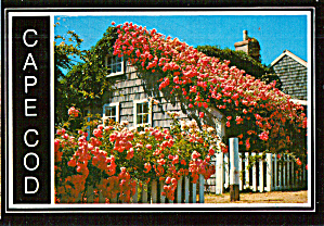 Rose Covered Cottage Cape Cod Massachusetts Cs7882