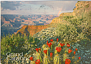 Claretcup Cactus in Bloom, Grand Canyon National Park (Image1)
