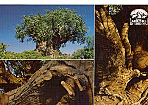 Views of Disney s Animal Kingdom cs8010 (Image1)