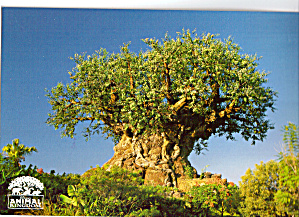 Tree Of Life Disney S Animal Kingdom Cs8012