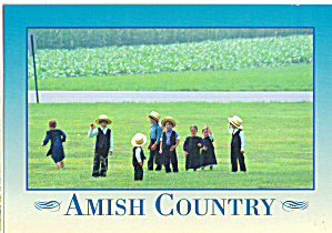 Amish Boys And Girls In Field Cs8040