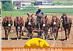 Amish Farm Scene with Six Mule Team cs8082 (Image1)