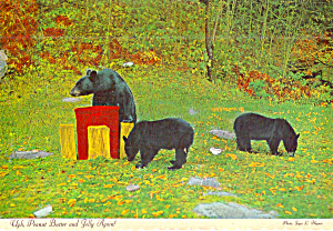 Mother  Black Bear and Cubs (Image1)