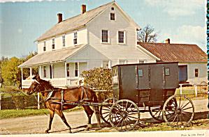Amish Horse and Buggy,Nappanee, Indiana cs8093 (Image1)