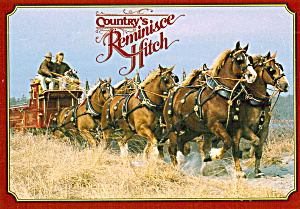 Country s Reminisce Hitch Prancing Thru Saw Grass cs8097 (Image1)
