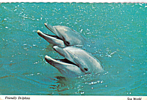 Friendly Dolphins, at Seaworld (Image1)