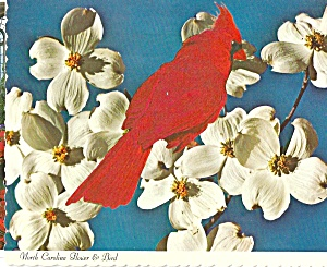 North Carolina State Bird The Cardinal Dogwood Blossoms cs8192 (Image1)
