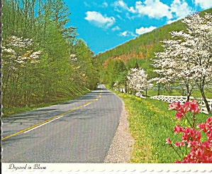 Dogwood in Bloom, North Carolina, State Flower (Image1)