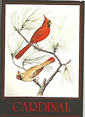 Cardinal, North Carolina State Bird cs8211 (Image1)