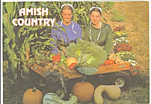 Amish Girls with Fall Vegetables Amish Country cs8235 (Image1)