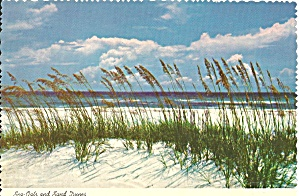 Sea Oats And San Dunes Cs8236