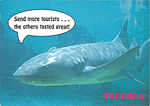 Shark Saying Send More Tourists Postcard Cs8357