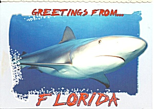 Greetings from Florida Pix of Shark  (Image1)