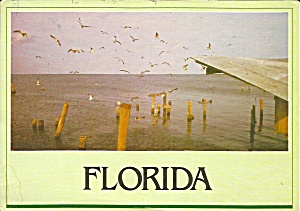 Florida Sea Gulls and Natural Splendor cs8367 (Image1)
