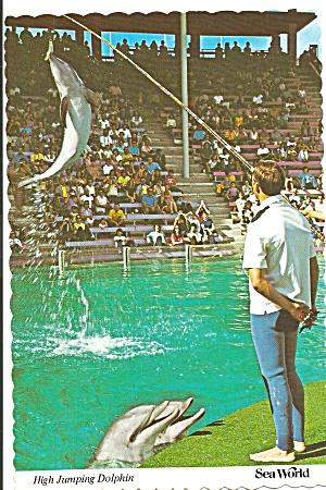 High Jumping Dolphins at Sea World (Image1)