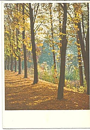 Bremen Germany Trees in Autumn cs8526 (Image1)