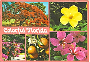 Colorful Florida Flowers cs8547 (Image1)