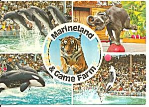 Marineland and Game Farm Canada Postcard cs8559 (Image1)