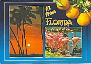 Florida Scenes Palms Flamingos Oranges Cs8834